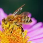 ハチミツのカロリーと糖尿病~糖尿病予防にハチミツ!ダイエットも~