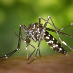 ジカ熱の症状~お腹の子供が危険です!あの蚊に気をつけよう!~